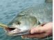 Ловим рыбу ультралайтом
