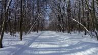 Чем заняться зимой или Го в лес на кардио!