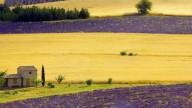 Опять хочу в Прованс.