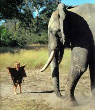 Типпи и дикие животные Африки