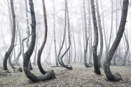Удивительный лес с кривыми соснами в Польше