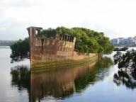 Корабль-плавающий мангровый лес