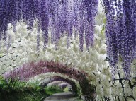 Сад цветов Кавати Фудзи