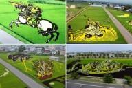 Картины на рисовых полях Инакадате
