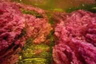 Каньо-Кристалес разноцветная река в Колумбии