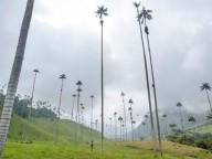 Долина самых высоких пальм в Колумбии