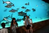 Речное сафари и парк дикой природы в Сингапуре