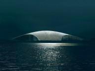 В Норвегии построят центр для наблюдения за китами
