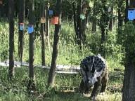 Необычный лес в Вермонте