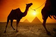 В Египте через 5 лет воцарится Шариат