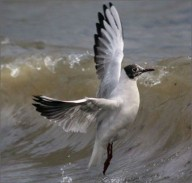 В Севастополе можно отдыхать, глядя на редких птиц