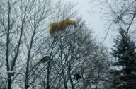 Парапланерист приземлился на дерево и застрял