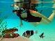 первая подводная система расширенной реальности
