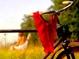 Проститутки дают скидки велосипедистам.