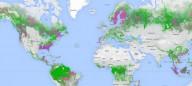 Google выпустил карту лесов мира