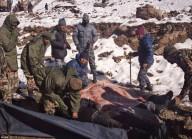Погибло более 40 альпинистов  в Непале