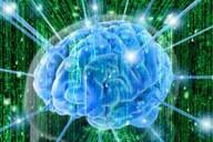 Физические упражнения омолаживают мозг.