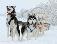 Харьковчан приглашают на Winter Dog Fest