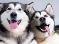 Харьковчан зовут на Winter Dog Fest