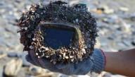Заряженную фотокамеру нашли после трёх лет под водой