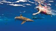5 рекордсменов марафонского плавания в открытой воде