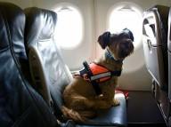 В SkyUp рассказали о правилах перевозки животных