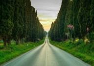 Кипарисовая аллея Болгери в Тоскане может исчезнут