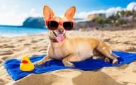 На Будванской ривьере создадут пляжи для отдыха с животными