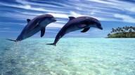 В Новой Зеландии туристам запретили плавать с дельфинами
