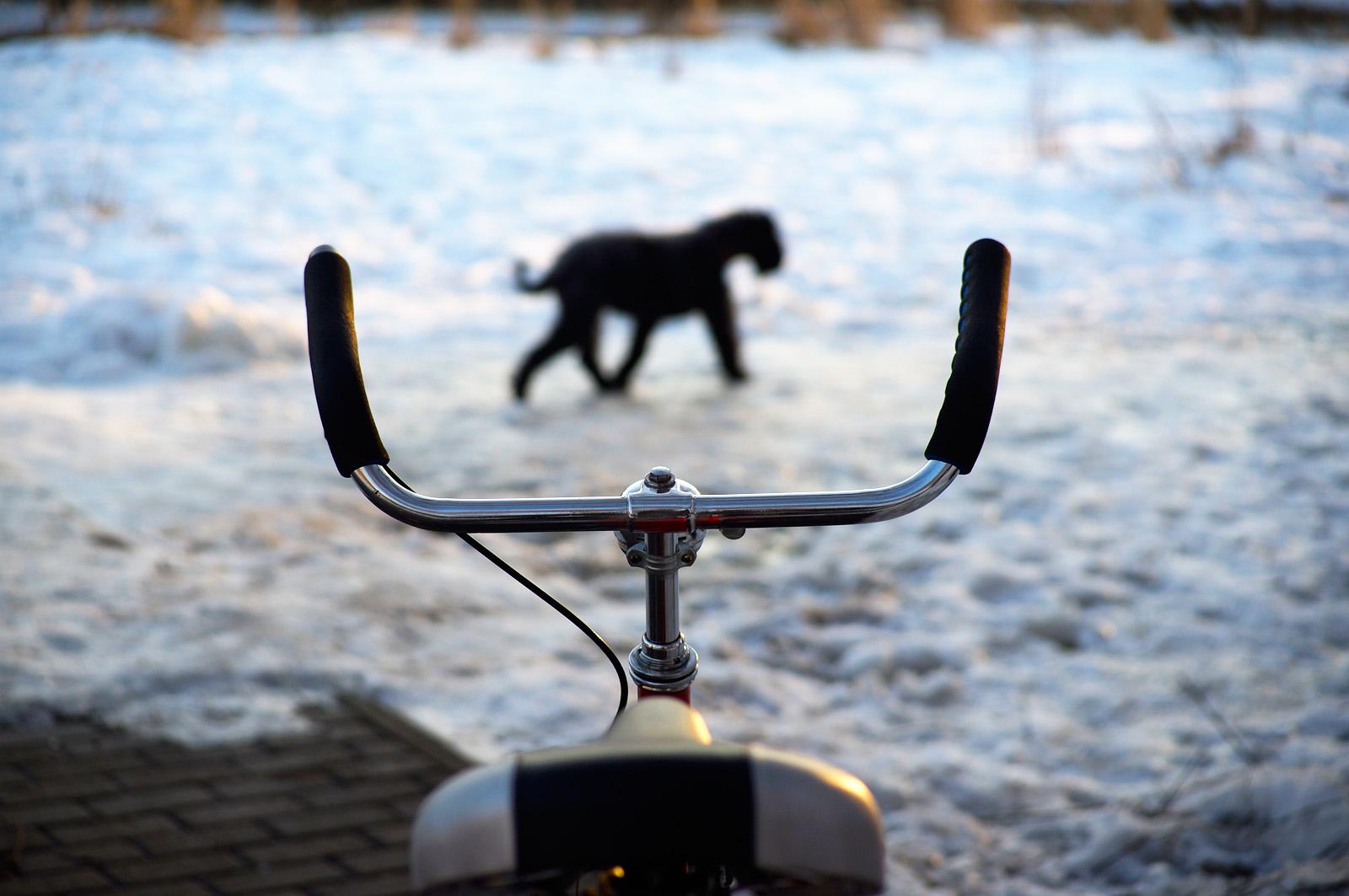 Bars You Love Bike Forums