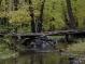 Пойменный лес ЭСХАРа - Мохначанский лес (2 часть) 21.10.2010