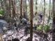 Эвкалиптовый лес (около Фамаликау - Португалия)
