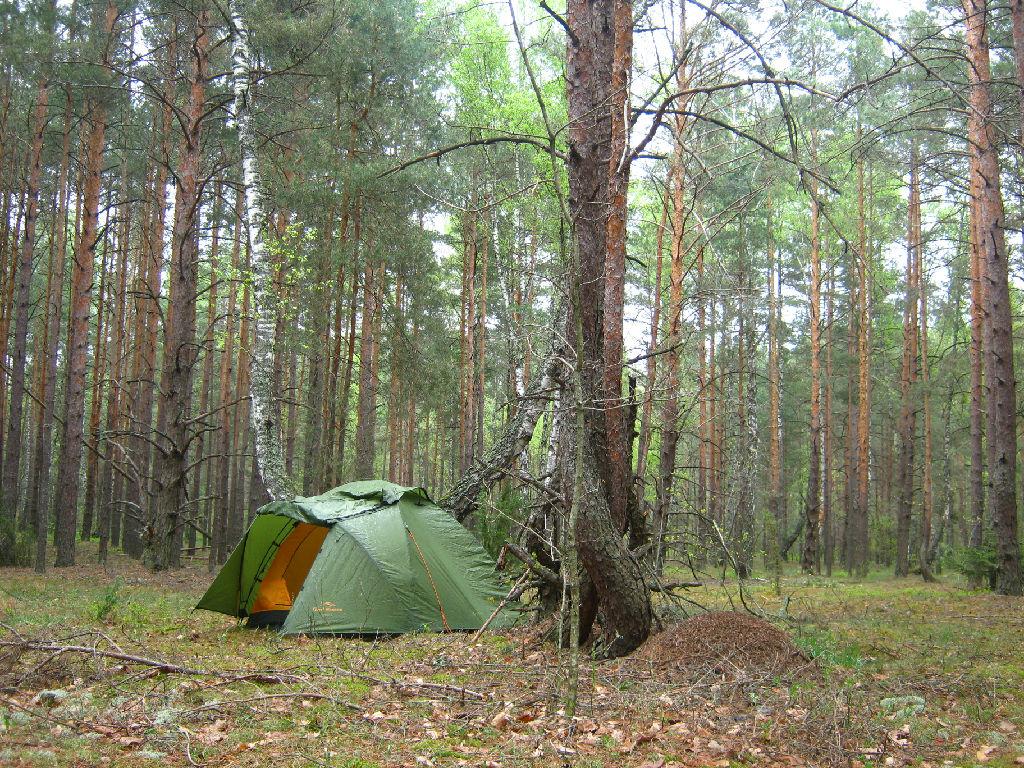Отмел девку в лесу