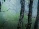 Єжик в тумані та ще й в горах