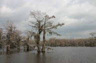 Озеро Каддо