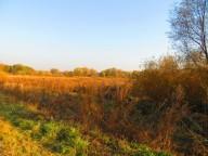 Золотая осень 2014 или лесные приключения