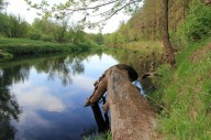Весняний сплав по річці Уборть