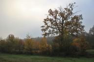Рейд по осінім лісам Волині
