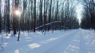 Пешком по Чугуево-Бабчанскому лесу