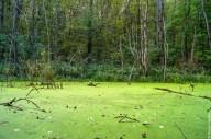 Тайны Черного леса