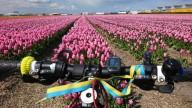 Нидерланды - страна велосипедов и тюльпанов
