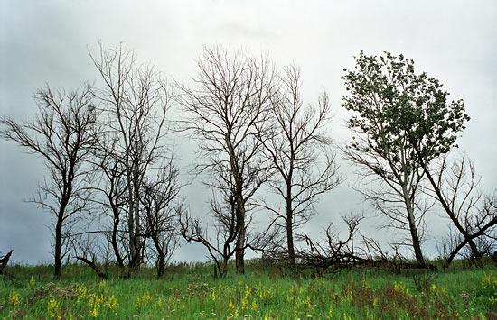 """КП """"Киевзеленстрой"""" избавило Киев от сухих деревьев"""